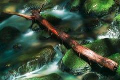 Liten vik i Muir Woods Royaltyfri Fotografi