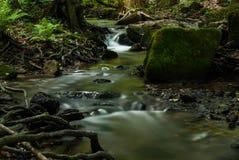 Liten vik i skogen Arkivfoto