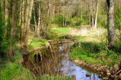 Liten vik i skogen, Polen, Masuria, podlasie Arkivfoton