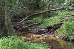 Liten liten vik nära Chattahoocheet River royaltyfri foto