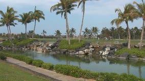 Liten vik och palmträd på kusten lager videofilmer