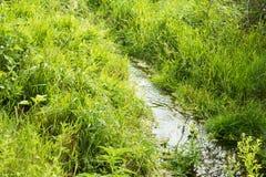 Liten vik på en bakgrund av grönt gräs Arkivbilder