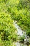Liten vik på en bakgrund av grönt gräs Royaltyfria Bilder