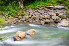 Liten vik som över flödar, vaggar i Rainforest Fotografering för Bildbyråer