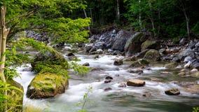Liten vik som över flödar, vaggar i Rainforest Royaltyfri Bild