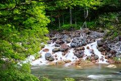 Liten vik som över flödar, vaggar i Rainforest Royaltyfria Bilder