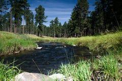 Liten vik som flödar till och med Custer State Park arkivbild