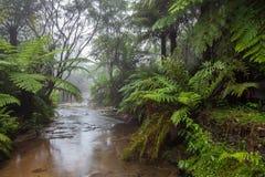 Liten vik som flödar till och med en rainforest i morgonmist Royaltyfri Bild