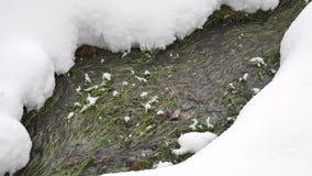 Liten vikflöden till och med skogen som väntar på ett vårbegrepp lager videofilmer