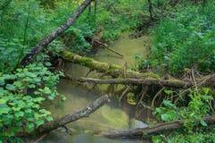 Liten vikvatten gör grön trädstammar Royaltyfri Bild