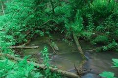 Liten vikvatten gör grön vegetation för fuktighet för trädstammar Arkivfoton