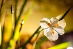 Liten vit delikat blomma i detalj med bakgrundsträdgården arkivfoto