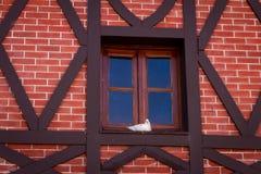 Liten vit duva på ett fönster Vägg av röda tegelstenar arkivbilder