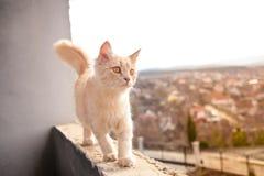 Liten vit katt på balkongen arkivfoto