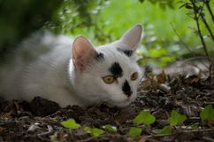 Liten vit kattunge med svarta grova spikar arkivbilder