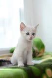 Liten vit kattunge på fönsterbrädan Royaltyfria Foton