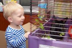 Liten vit pojke som matar svart kanin Arkivbilder