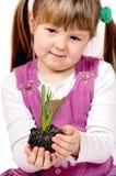 liten växt Royaltyfri Bild