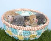 Litera de gatitos recién nacidos dos semanas de viejo en cesta Imagen de archivo