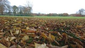 Litera de la hoja del otoño en un campo Imágenes de archivo libres de regalías