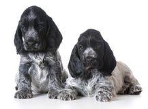 Litera de perritos Foto de archivo