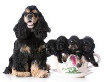 Litera de perritos imagenes de archivo