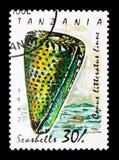 Literatus del cono del cono, lumache di mare e serie indicati da lettere delle cozze, c Immagini Stock