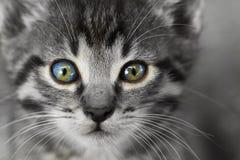 litet övre för tät kattunge Fotografering för Bildbyråer
