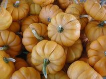 Litet apelsin, dekorativa pumpor i en hög arkivfoto