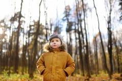 Litet barn som går i skogen på höstdagen Royaltyfri Bild