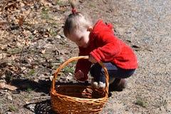 Litet barnflicka som samlar till korgen Arkivbild