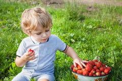 Litet barnpojke med bunkejordgubbar på organisk lantgård Royaltyfri Foto
