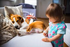 Litet behandla som ett barn flickan med beaglehunden som ligger på soffan royaltyfri bild