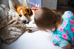 Litet behandla som ett barn flickan med beaglehunden som ligger på soffan royaltyfria foton