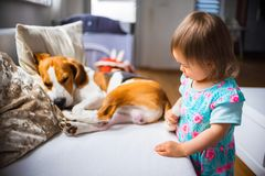 Litet behandla som ett barn flickan med beaglehunden som ligger på soffan arkivbild