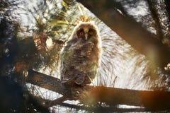 Litet behandla som ett barn ugglan i skogen royaltyfri foto