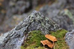 Litet berg 2 Arkivfoto