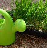 Litet bevattna kan ett gräs Royaltyfri Fotografi