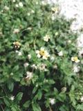 Litet blomma och gräsplanblad Arkivfoton