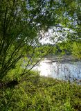 Litet damm som omges av frodig grön vegetation Royaltyfria Bilder