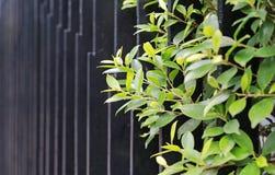 Litet dekorativt trädöverkantblad på skyddsgallerstaketväggen arkivfoto