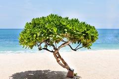 Litet dekorativt träd på stranden med horisonten arkivbild