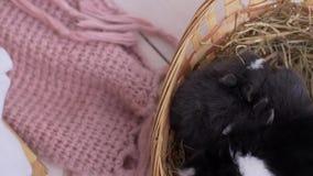 Litet dekorativt vitt kaninsammanträde in i korgen Påskberömmen stock video