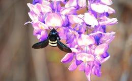 Litet direkt av naturen Royaltyfri Foto