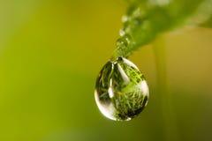 litet droppgräs Arkivfoton