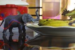 Litet elefant och ljus Arkivbild