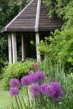 Litet engelskt sommarhus med Alliums Royaltyfria Bilder