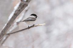 litet fågelsammanträde på en filial Arkivfoton