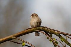 Litet fågelsammanträde på ett träd Royaltyfria Foton