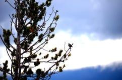 Litet fågelsammanträde på ett träd med en blå himmel Arkivbild